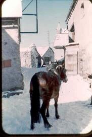 1042 CZ Mule