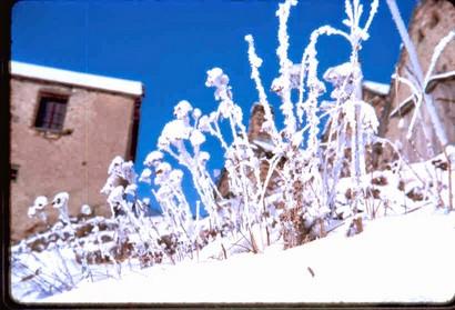 1059 CZ Fleurs de Givre et neige